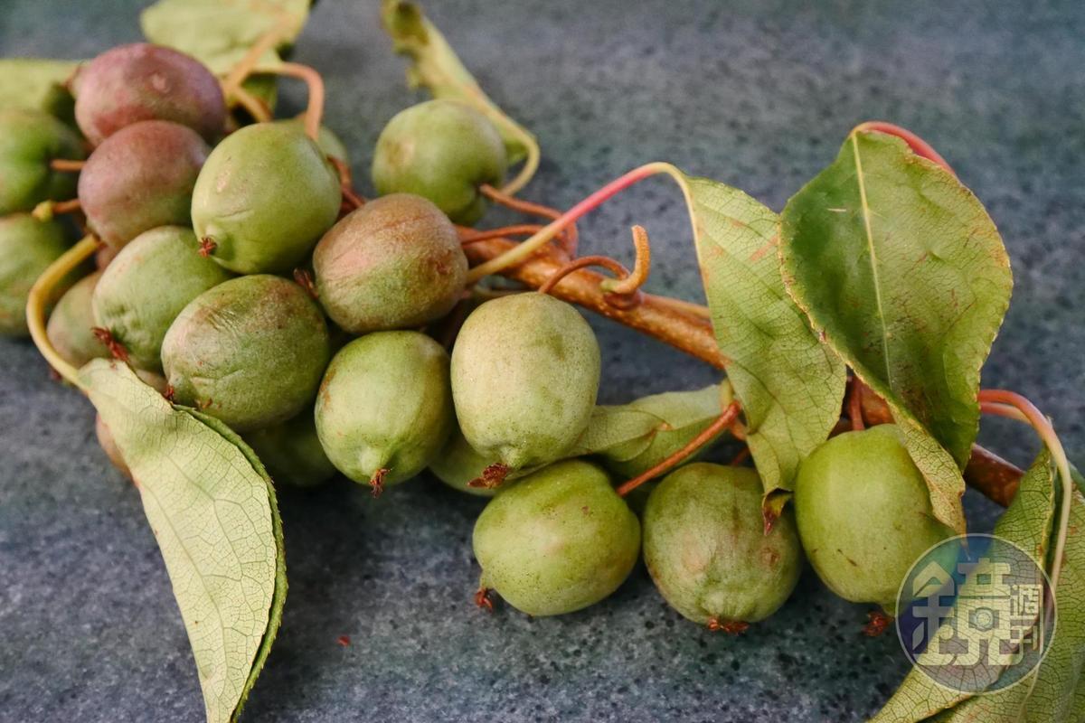 「Kiwi Berry」不用削皮,可以直接吃,果肉軟甜,幾乎沒什麼酸味。