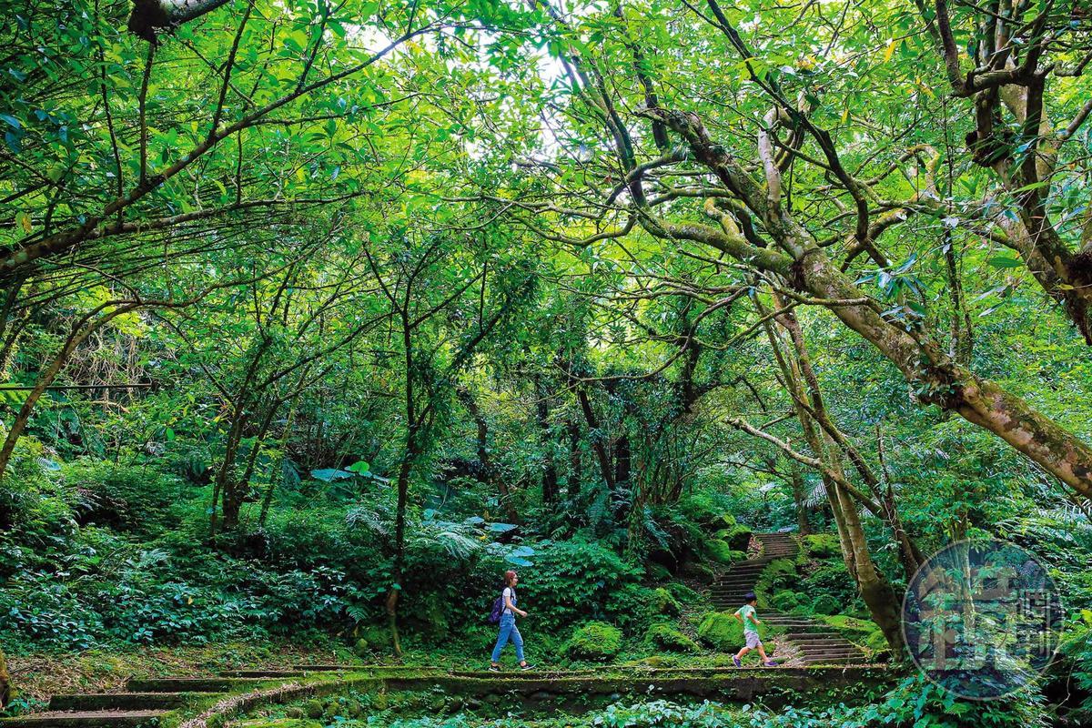 「孝子山步道群」前段是深幽森林,石階古拙,漫溢原始神祕感。