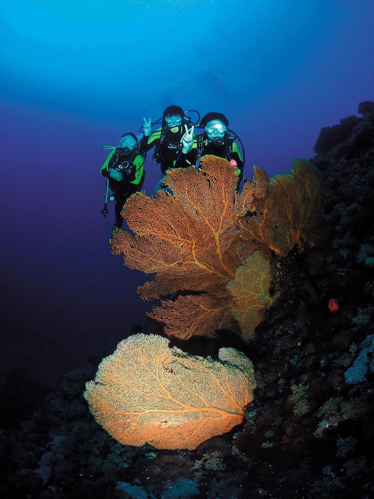 騏艦藍海灣的體驗潛水皆為1對1教練指導,還會有專人協助拍照。(騏艦藍海灣提供)