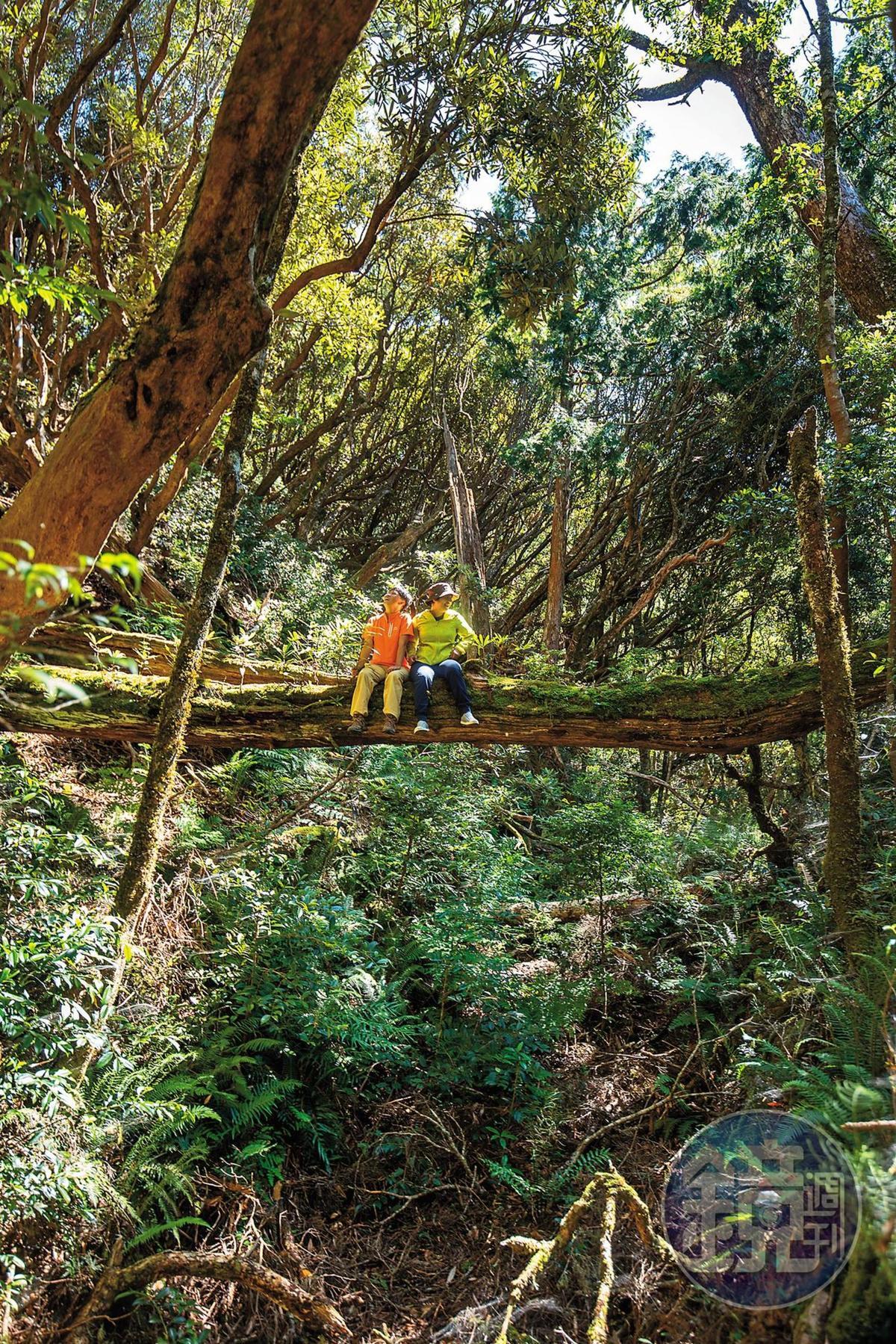 「塔曼山」為林相豐富的中級山。