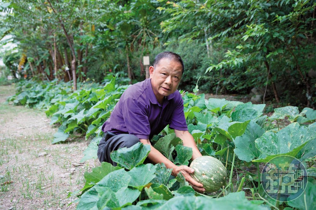 自家種植的有機蔬菜,健康又美味。