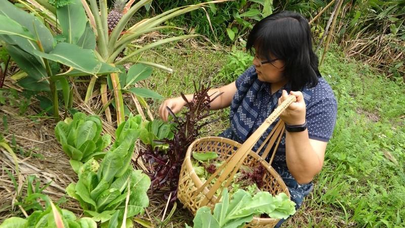 大地旅人的前學員檸檬特地從台北來到樸門台東教育基地,協助課程進行期間的廚房工作。需要生菜時,走幾步到菜園裡採摘即可。