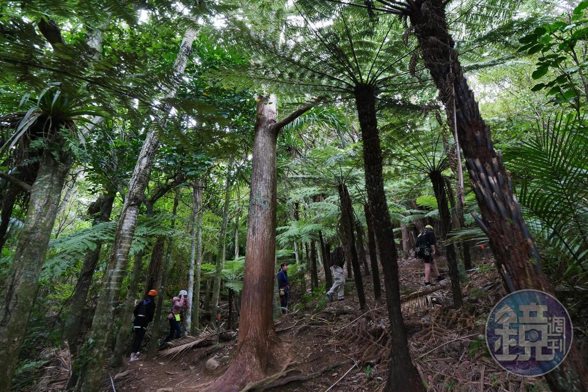結束高空滑索體驗,會在教練的引領下,徒步穿越原始森林。