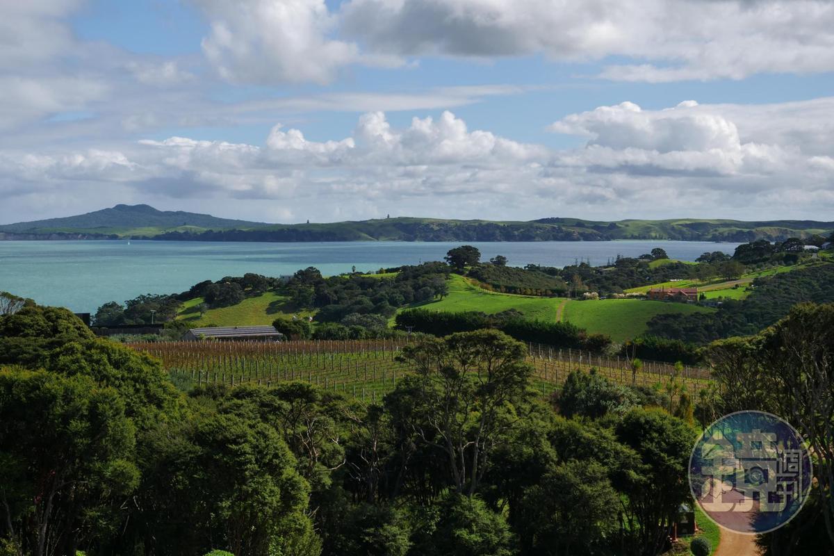 Waiheke Island風景美如仙境,每年吸引百萬人次造訪。