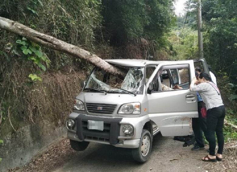 倒塌的樹幹從前擋風玻璃插入,頂開左後車門穿出,劉男胸部也遭瞬間猛力撞擊,不幸因胸腔內出血傷重死亡。(消防局提供)