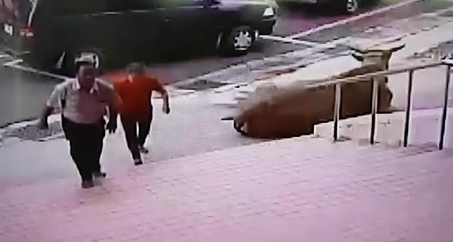 走失的大黃牛在警局相當悠閒 飼主反而是相當擔憂地跑到警局認領。(警方提供)