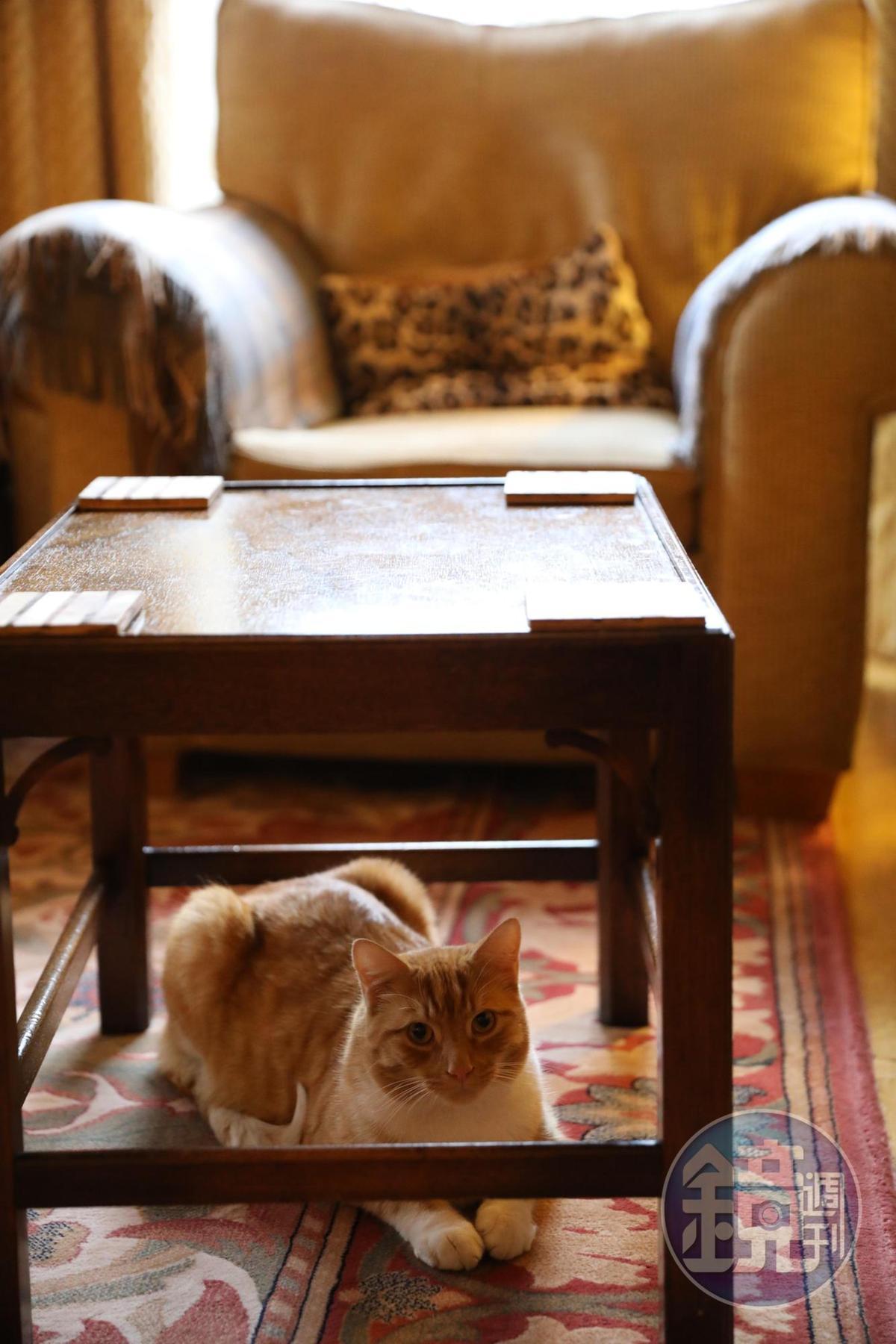 飯店主人的愛貓,有點怕生。
