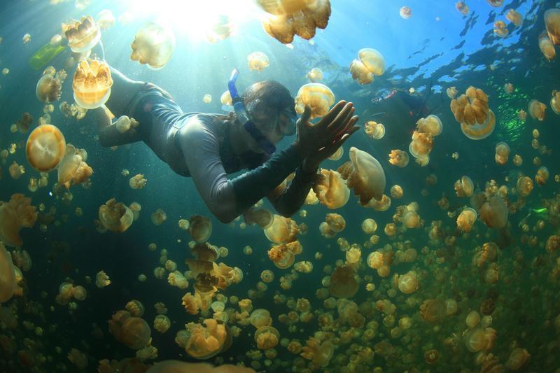 帛琉擁有豐富的海洋觀光資源,是浮潛愛好者的天堂。圖為帛琉知名的水母湖。(東方IC)