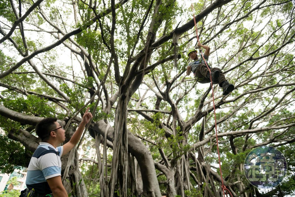 吳威進也是探索教育老師,為旅人安排攀樹體驗。