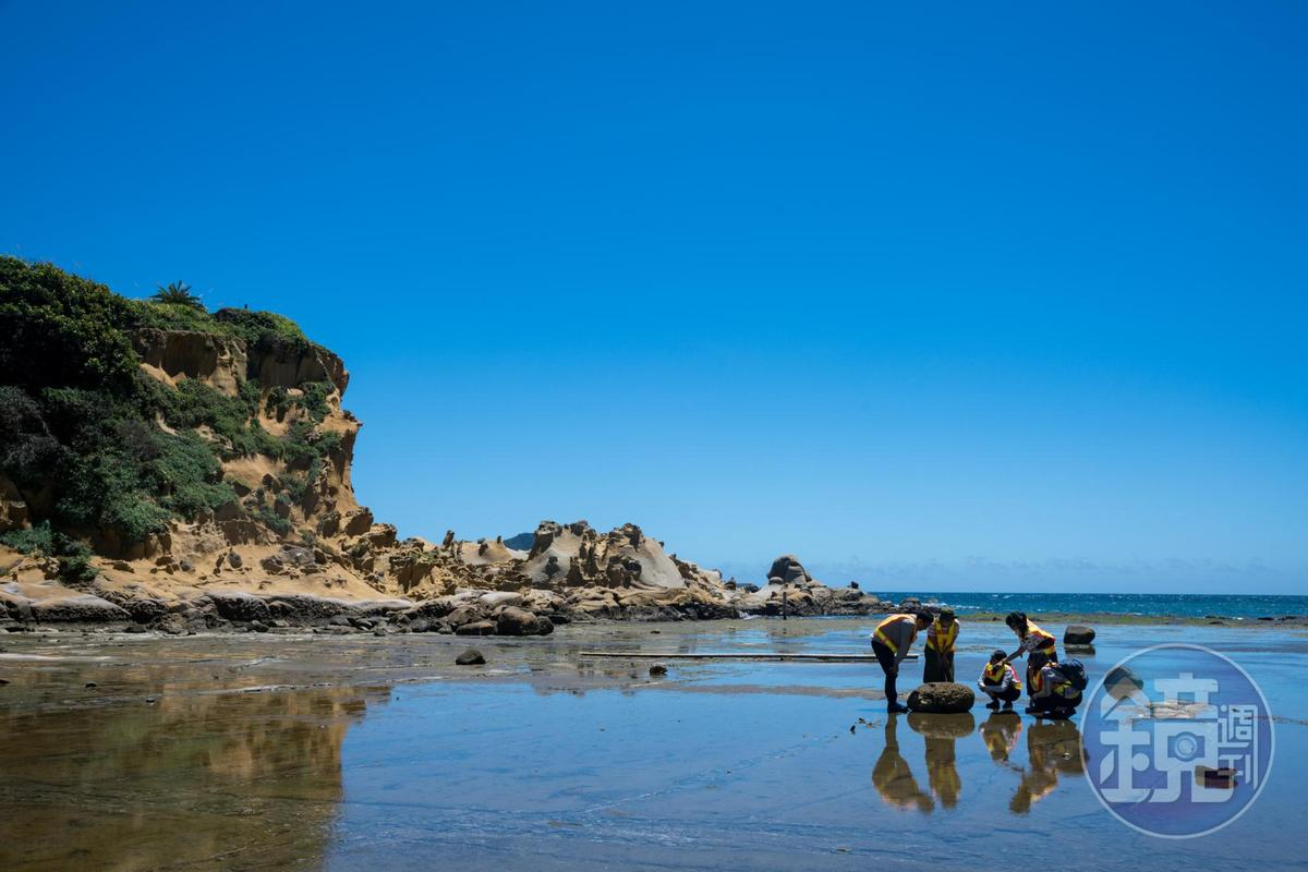 「和平島公園」內的海蝕平台,退潮之後即是活生生的潮間帶教室。