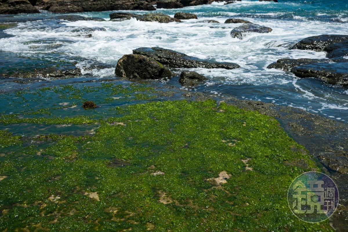 「和平島公園」海蝕平台是當地居民口中的「青菜埕」。