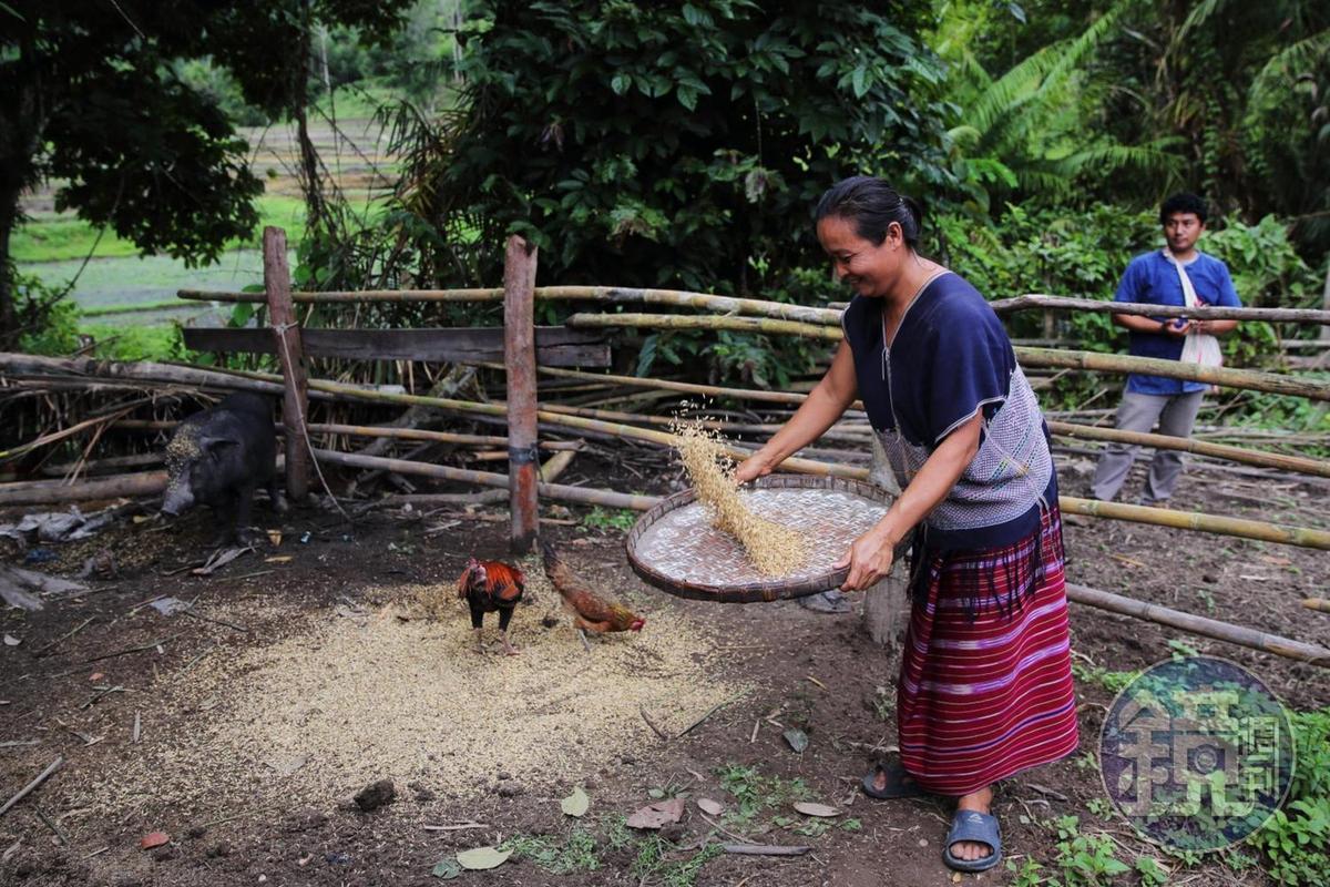 克倫族人與大自然很親近,過著養豬養雞的農家生活。