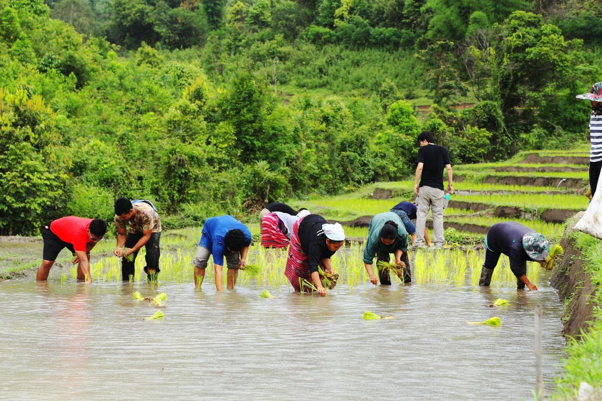 來到山區部落,能夠跟著當地人一起下田插秧。(Airbnb提供)