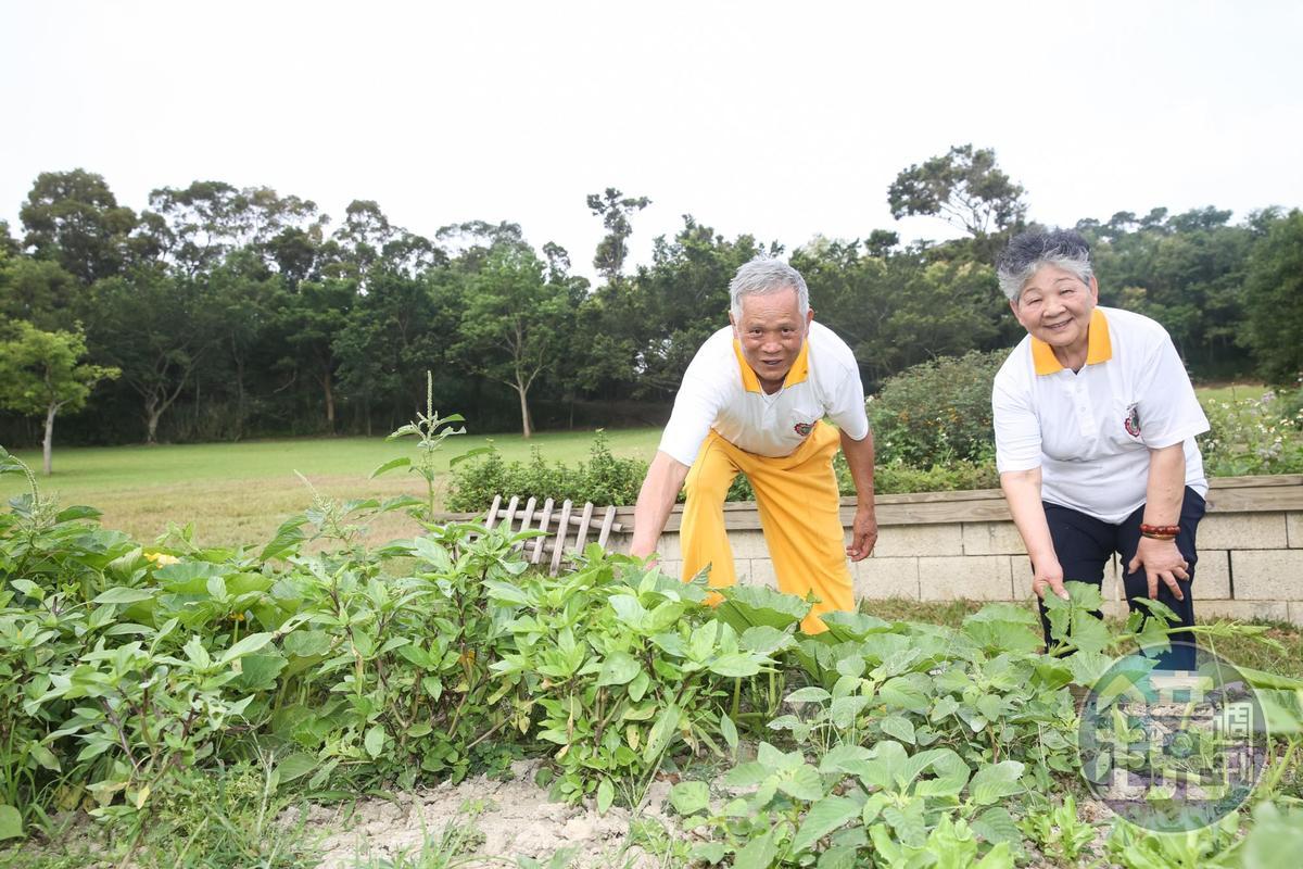 今年78歲的吳敦瑤(左)與妻子吳孫碧珠(右)活到老學到老,兩人把在國外學到的自然農法引進牧場,規劃食農教育體驗課程。