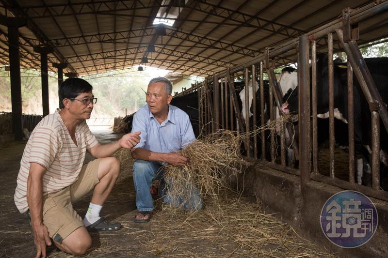 次子吳明賢(左)扛起畜牧重任,讓吳敦瑤(右)欣慰養牛技術後繼有人。