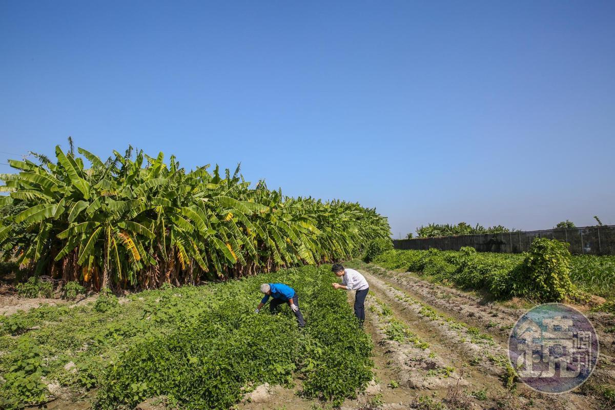 植物生長是奧秘的科學,其中可食的蔬果還能說出土地的故事。
