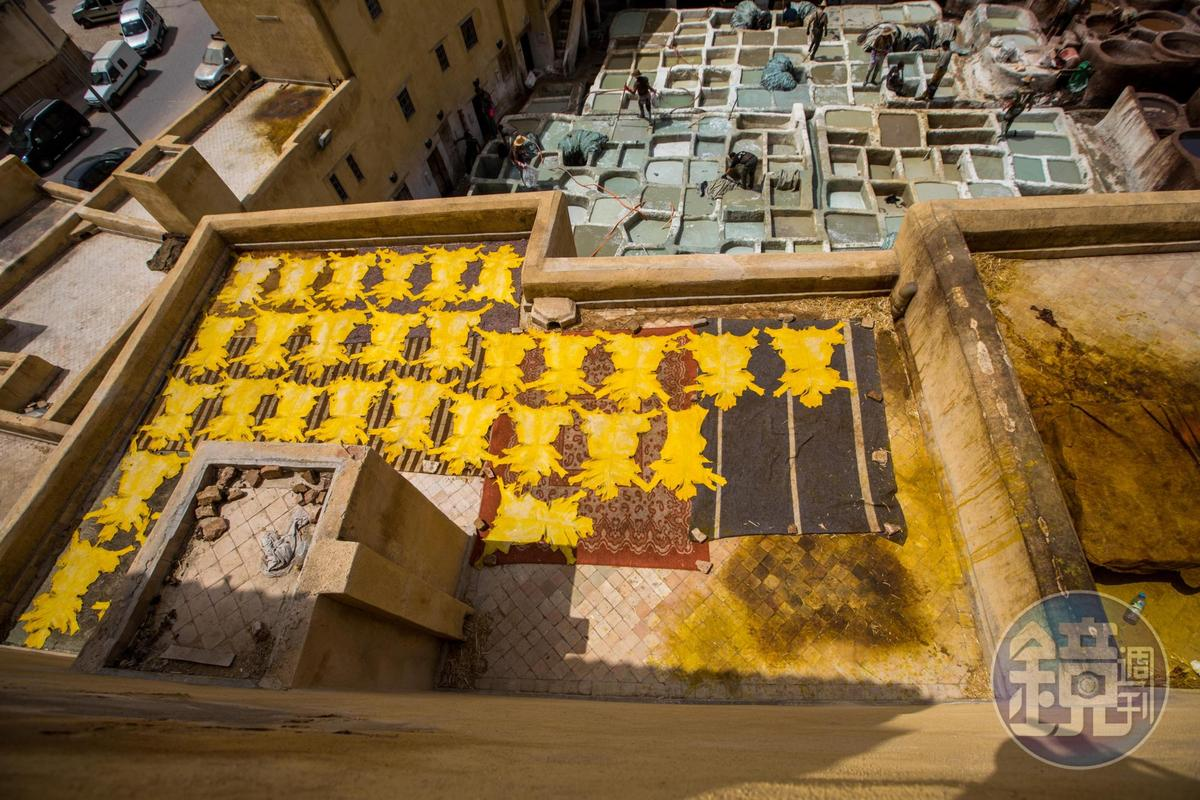 攤在平台上的黃色皮,是各種顏色中最貴的。