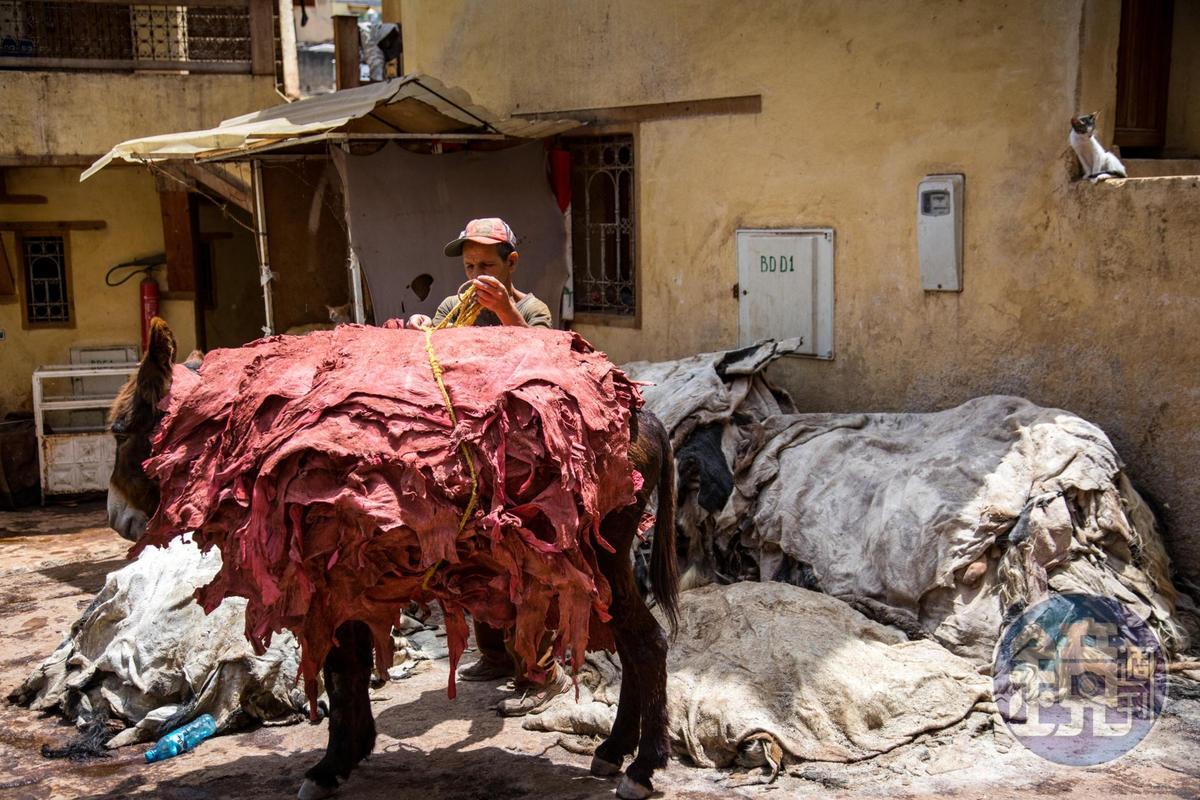 裡頭還用驢子用來搬運毛皮。