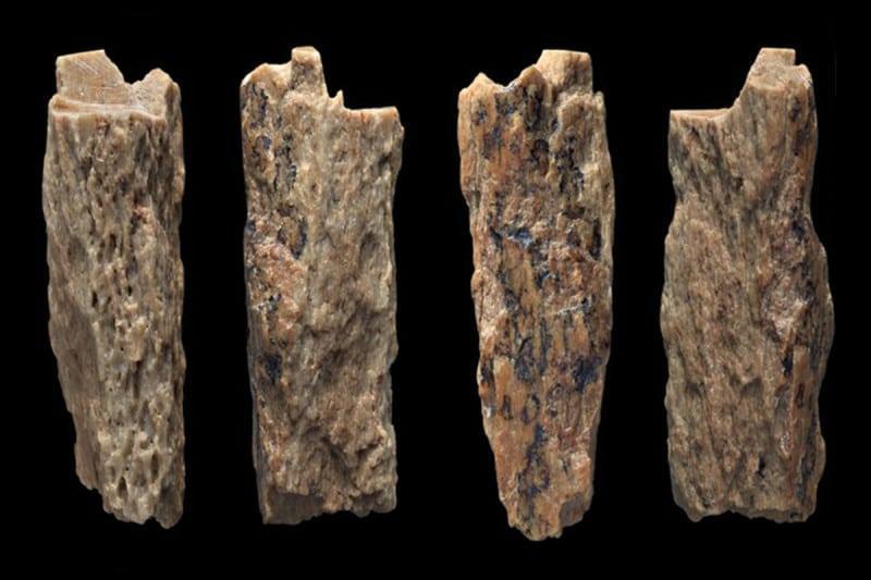 被發現的遠古骨骸。(翻攝自Brown, S. et al/CC BY 4.0)