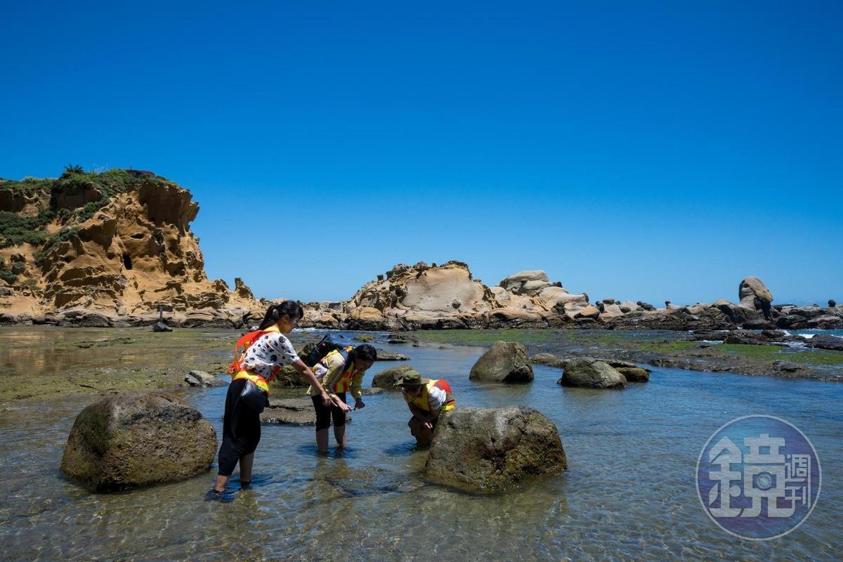 和平島公園的潮間帶深度導覽,讓遊客們只顧低頭尋寶。