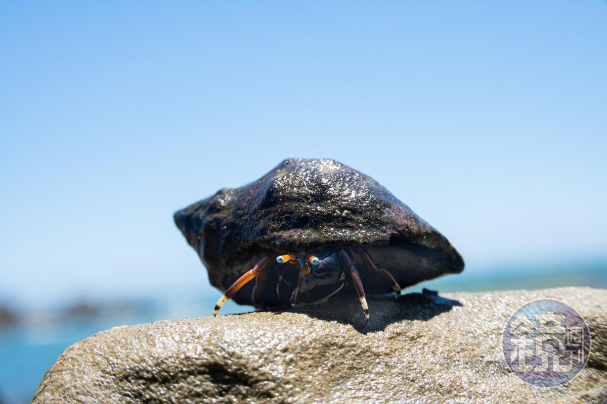 猶如載上黑色頭盔的寄居蟹。