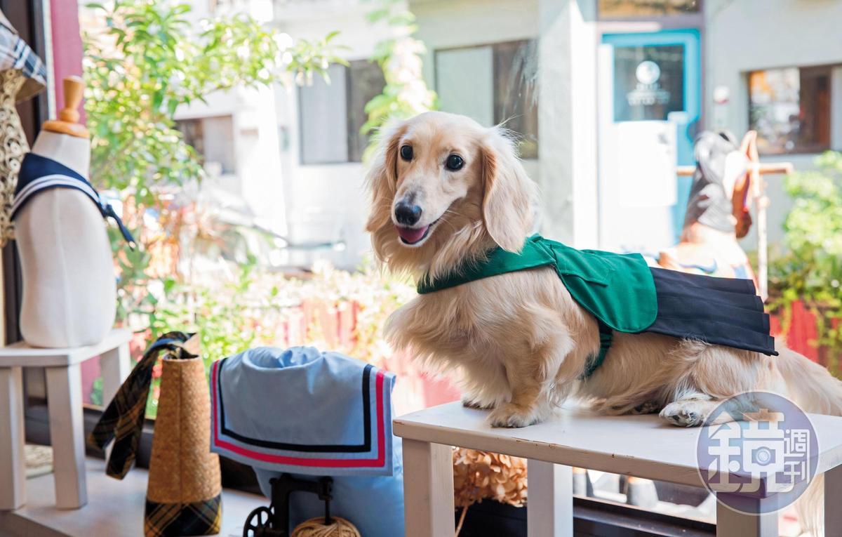 ZAZAZOO的小店長芋頭身穿北一女狗制服。(880元/套)