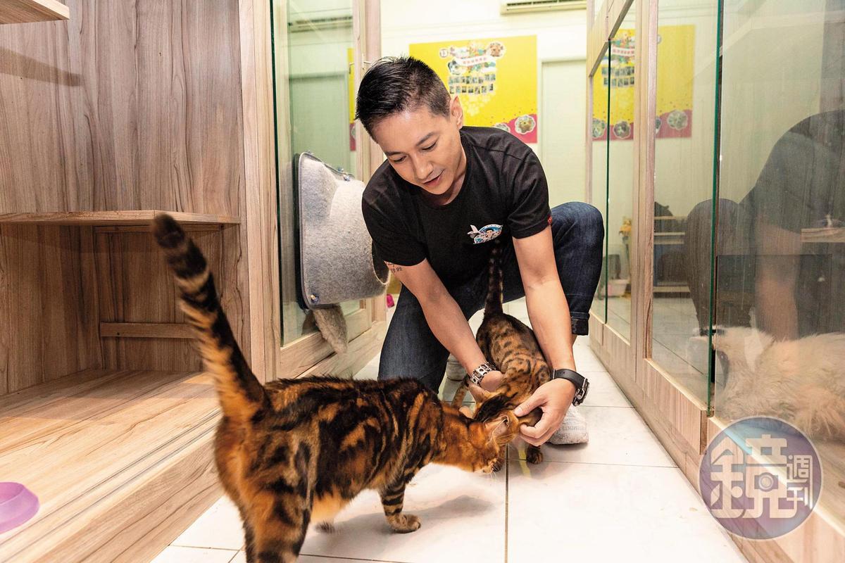 李信恩是愛貓之人,店內有他親手救回的浪貓,幫牠們養好身體及結紮後,就為牠們找家。