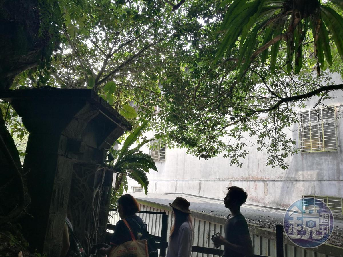 兩戶連通的「百年石頭屋」當年是中藥行,上方還有祕密小花園。