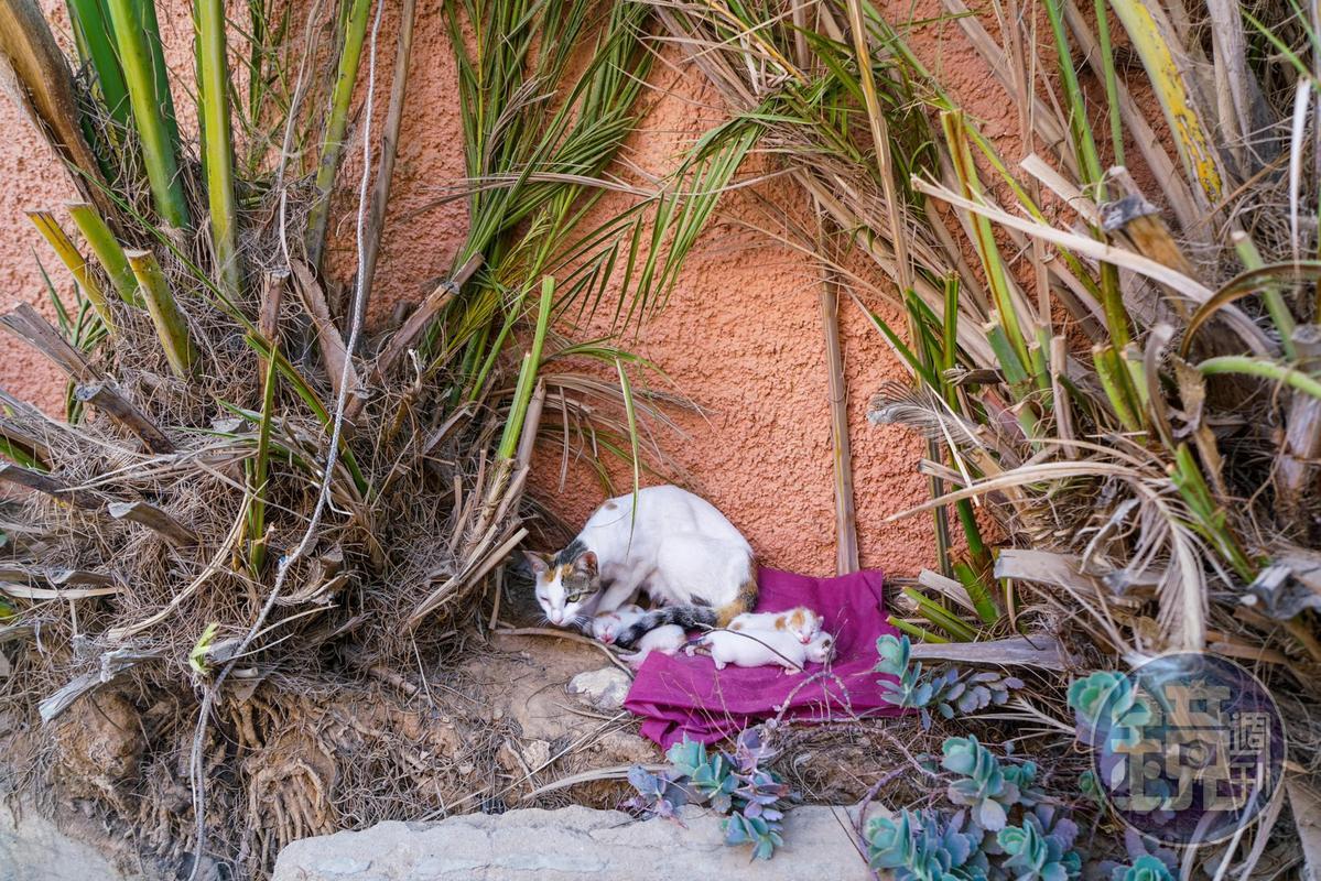 瘦瘦的母貓剛產下一隻小貓,這幾乎是他唯一的家人。