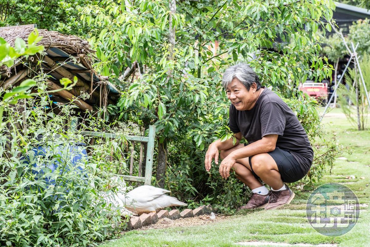 石教授每天忙於照顧植物及雞鴨等動物,開心且忙碌。