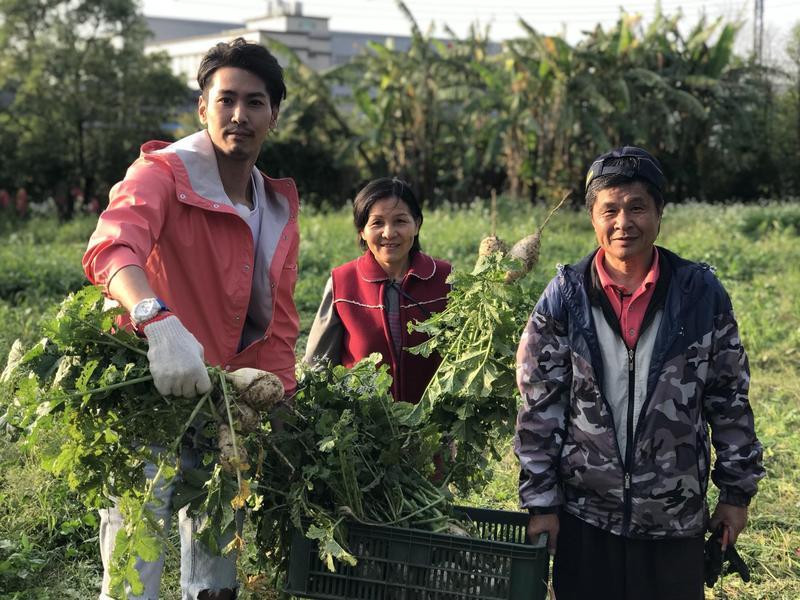 陳德烈主持全新節目,下鄉和小農們一起拔菜。(大朝電視傳媒)