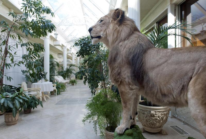 革命後的烏克蘭,在被推翻的亞努柯維奇總統官邸發現的填充獅子。這座官邸面積340英畝,除了主樓外還包括會客廳、停車場、溫泉游泳池、會議廳、動物園、高球場、一座興建中的舞廳,以及停泊於聶伯河畔的一艘帆船。(東方IC)