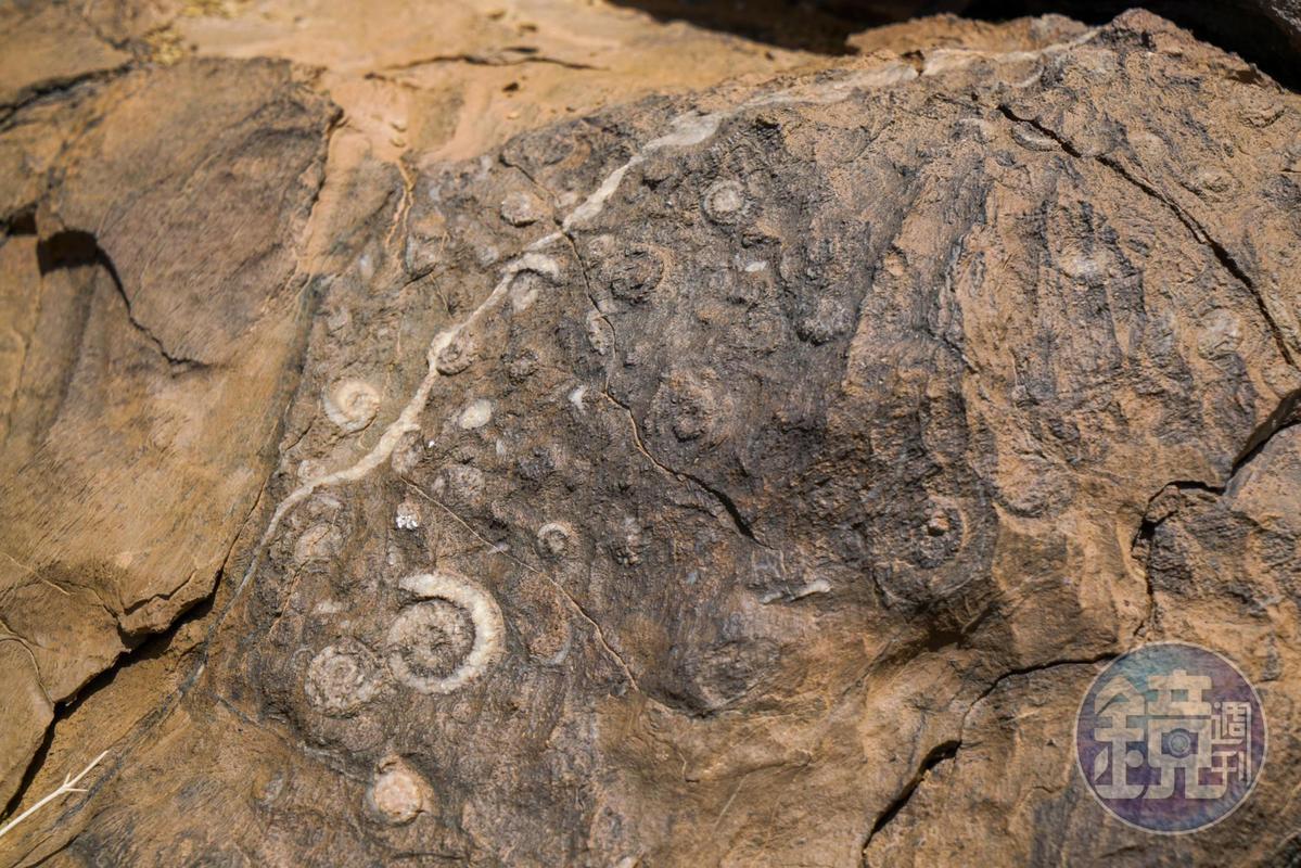 撒哈拉的許多石塊上,都可以看見化石,這也需要當地人帶路才看得到。