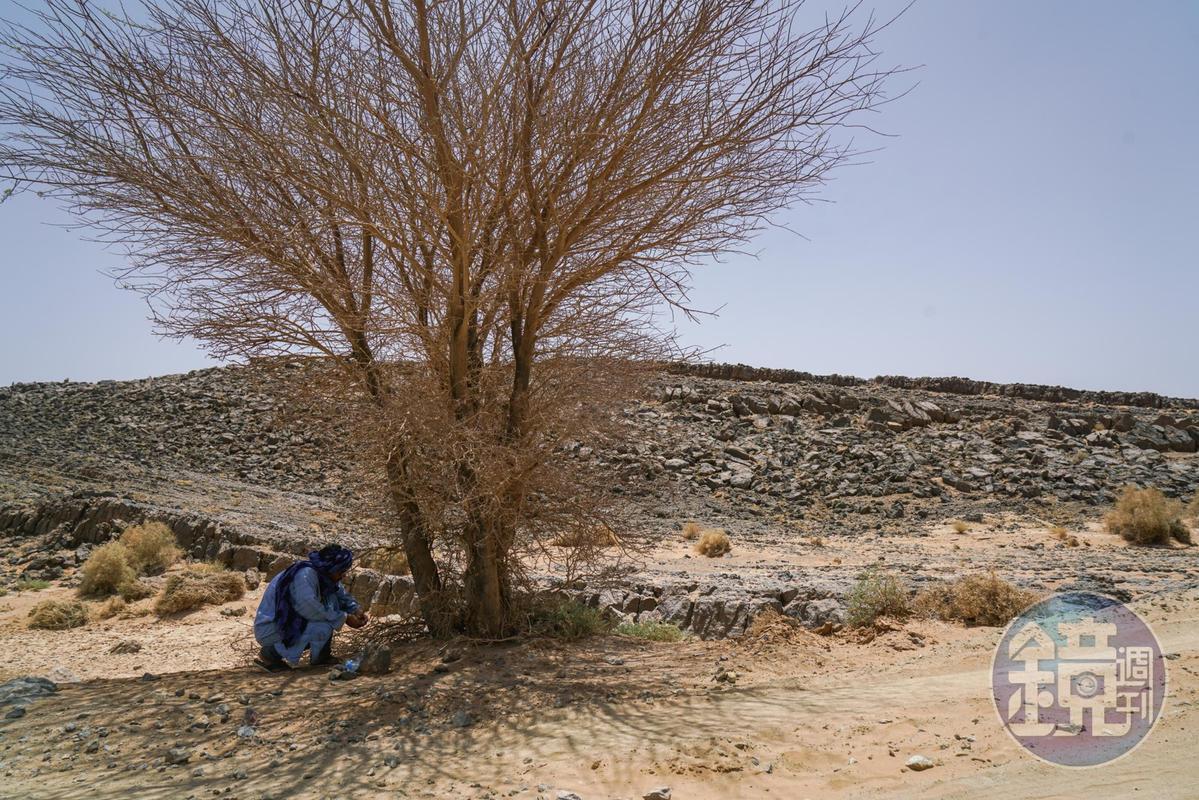 Lahbib下車捧起寶特瓶,裝了點水放在樹下。