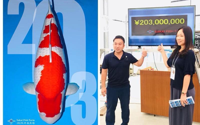 錦鯉女王鍾瑩瑩標下一尾身價5500萬的紅白錦鯉「S傳說」。(翻攝自鍾瑩瑩臉書)