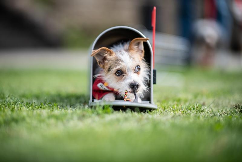 小狗出生後6-8周「最可愛」的階段,也是與人類建立依附清感的關鍵時期。(東方IC)