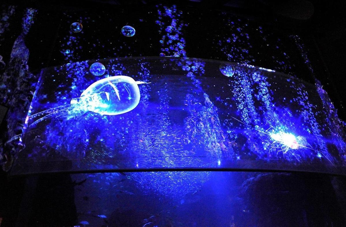 融合光雕與水族動物的AQUARIUM by NAKED水族館系列,打造光影與魚群悠游的夢幻水底世界。(NAKED Inc.提供)
