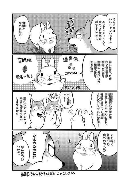 兔子講解一般大便和盲腸便的差別。(《兔子即是正義》試閱)