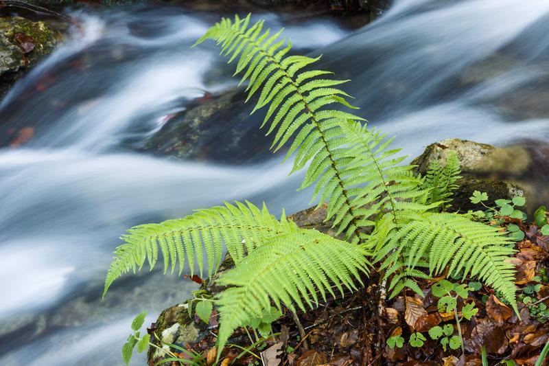 不起眼的蕨類可用於移除環境毒素,堪稱環保奇兵。(東方IC)