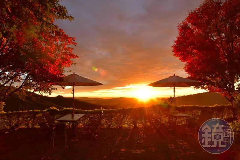 秋楓搭配夕陽,是楓葉民宿最無敵的美景。(楓葉民宿提供)