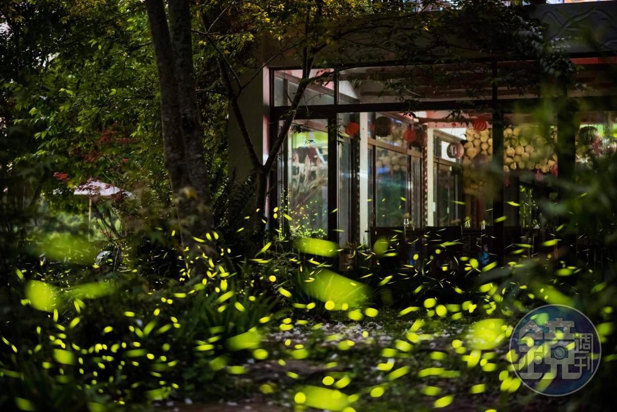 3~5月間的螢火蟲季節,在屋內即能賞螢。(楓葉地圖提供)