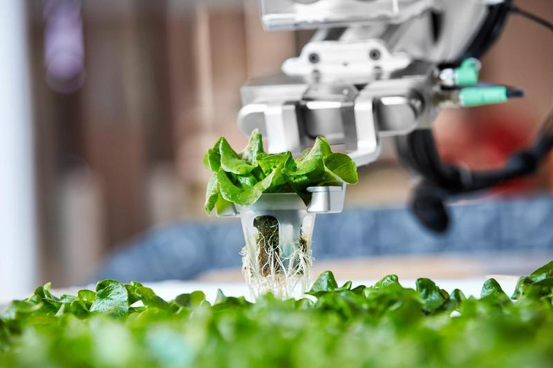 農場自動化可解決農業人力不足問題。(翻攝techcrunch)