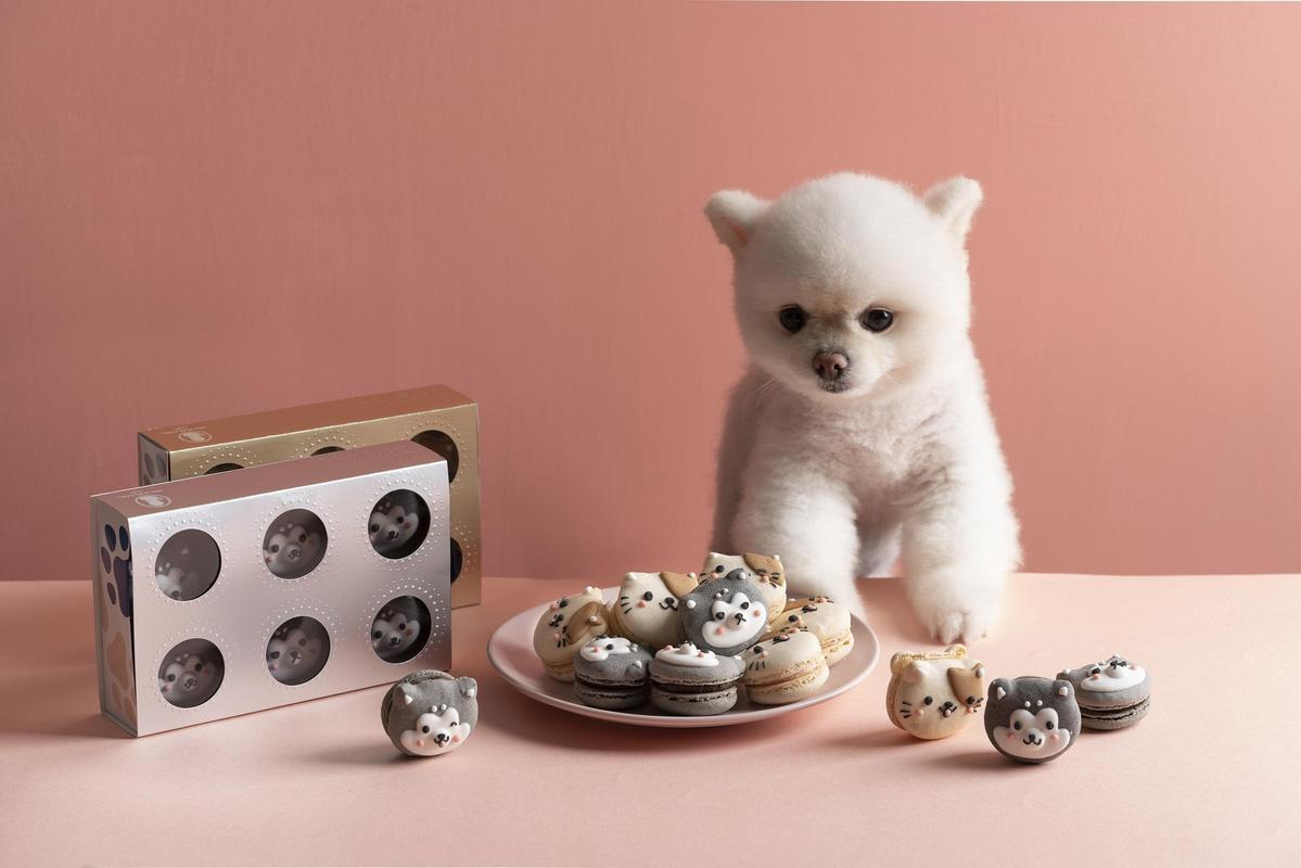 這次造型禮盒由Dazzling Café製作,將馬卡龍外型幻化為哈士奇跟橘斑貓模樣。(愛最大公益平台提供)