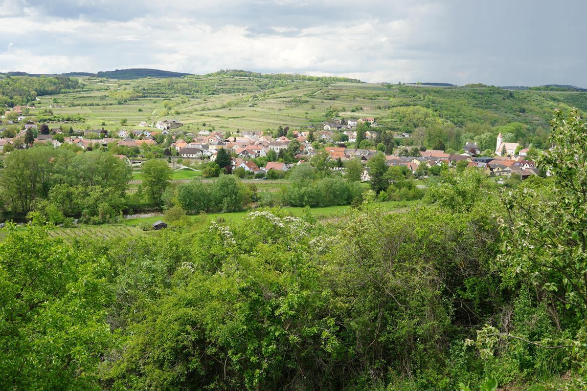 自然酒風潮讓葡萄園恢復自然狀態,尊重環境的生物多樣性。(林裕森提供)