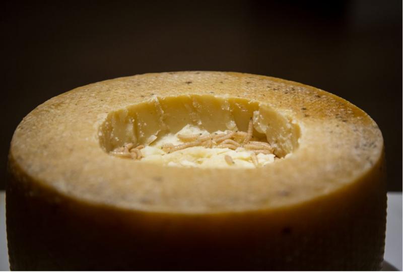 位於瑞典的噁心食物博物館正在館內展出各國「被認定作噁」的食物。圖為來自義大利薩丁尼亞島的活蛆乳酪。(Disgusting Food Museum)
