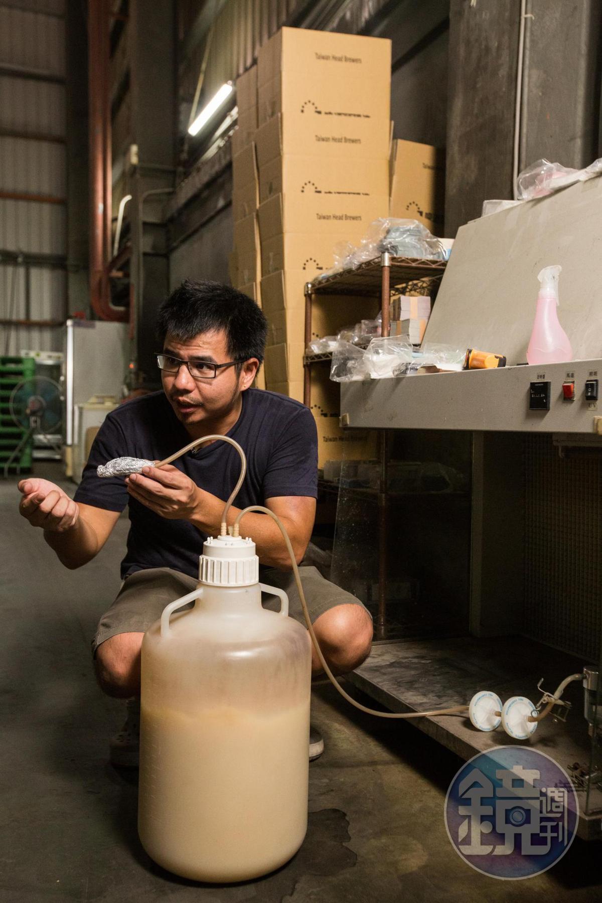 酵母會將醣化後的麥汁轉化為酒精。