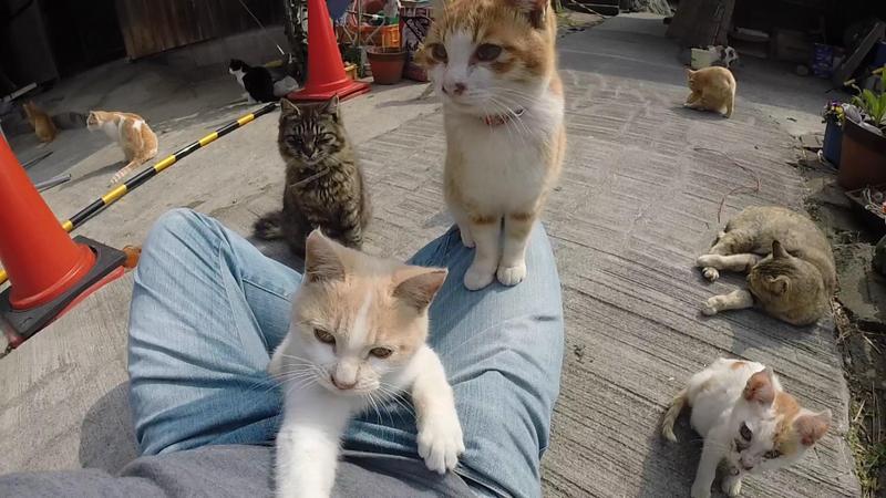 日本愛媛縣的貓島,是貓奴必遊景點之一。(東方IC)