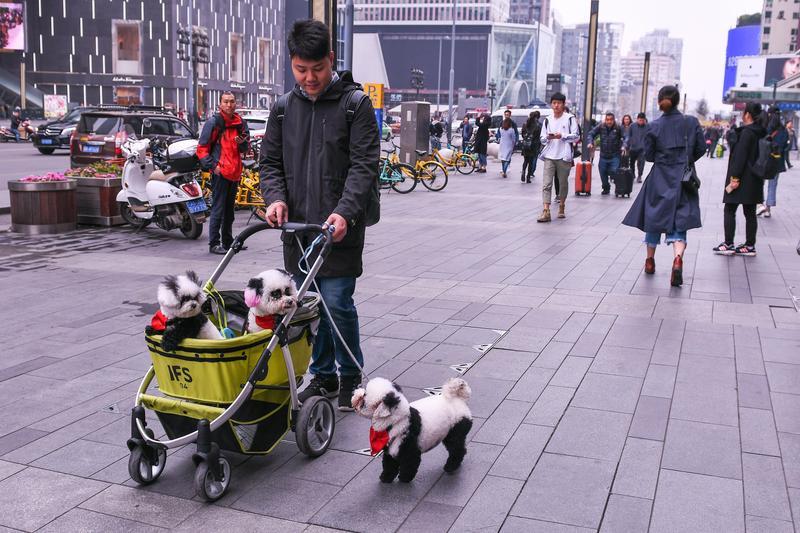 中國毛小孩日增,有地方政府推出飼主「計分制度」。(東方IC)