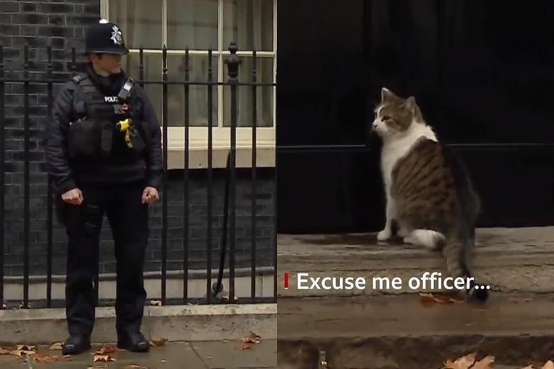英國首席捕鼠官賴瑞坐困家門前進不去,而轉頭向一旁駐守警員求救,在警員的幫忙敲門下,才順利回到家中。(圖取自BBC Twitter)