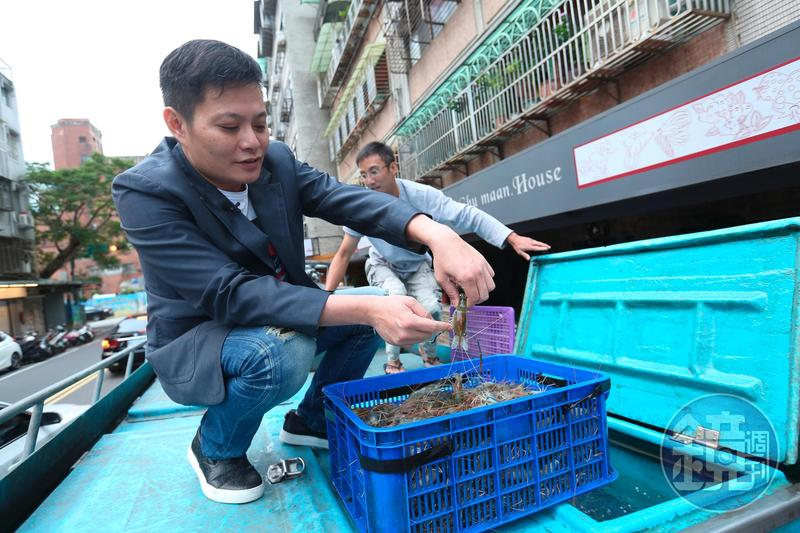一品活蝦每日需採買約三百斤的活蝦,再分送至各店。